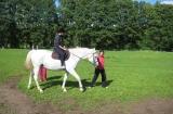 Koňské radovánky